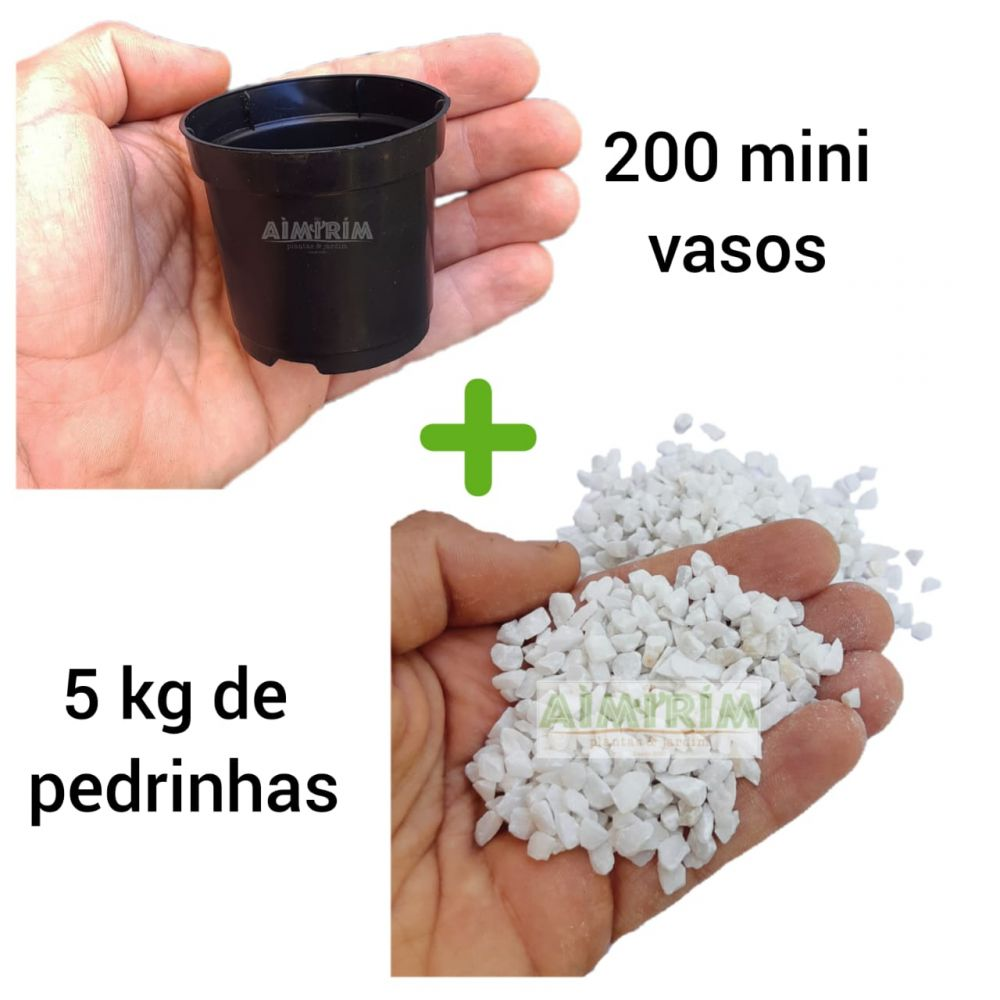 Kit: 200 Mini Vasos Pote 6 Preto e 10 kg de Pedrinhas Branca