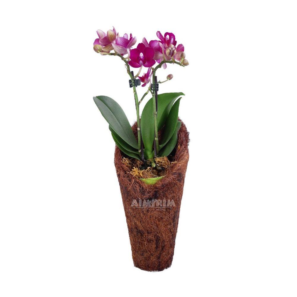 Um Vaso Fibra De Coco tipo Concha Plantas Orquídeas Decoração